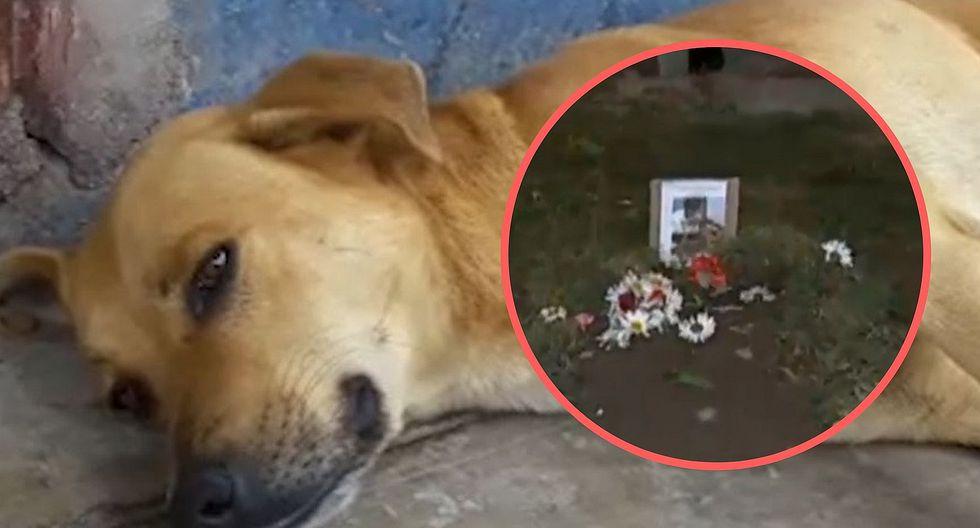 "Murió ""Gringo"", perrito que ayudó a un joven asaltado en Ate (VIDEO)"