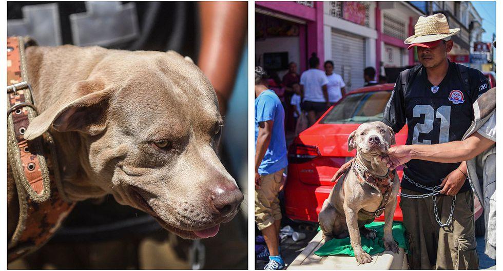 Conoce a 'Bolillo', el perro que viaja con los migrantes hondureños rumbo a Estados Unidos (FOTOS)