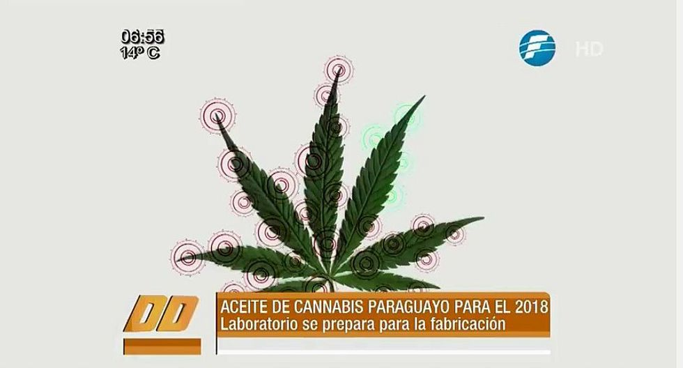 Paraguay ya vende aceite de marihuana para aliviar enfermedades [VIDEO]