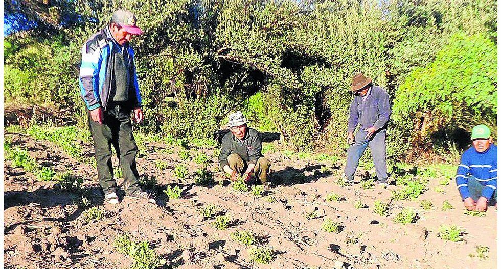 Granizo, alta temperatura y heladas afectan al agro de Huancavelica