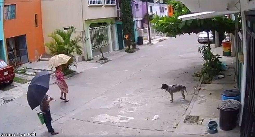 Captan a mujer robando plato para comida a perro (VIDEO)